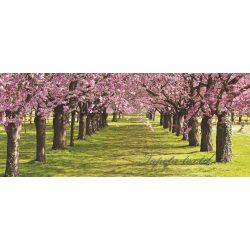 Virágzó fák poszter, fotótapéta 010VEP /250x104 cm/