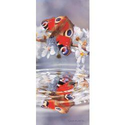 Pillangó öntapadós poszter, fotótapéta 013SKT /91x211 cm/