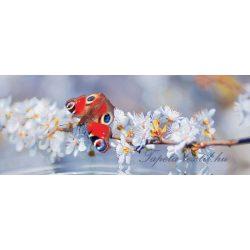 Pillangó vlies poszter, fotótapéta 013VEP /250x104 cm/
