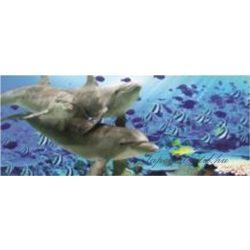 Delfinek vlies poszter, fotótapéta 071VEP /250x104 cm/
