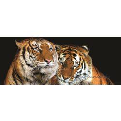 Tigrisek poszter, fotótapéta 130VEP /250x104 cm/