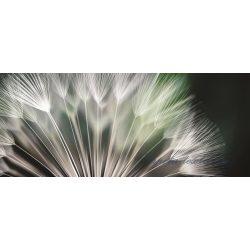 Pitypang vlies poszter, fotótapéta 131VEP /250x104 cm/