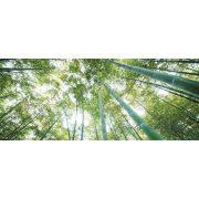 Bambusz erdő vlies poszter, fotótapéta 150VEP /250x104 cm/