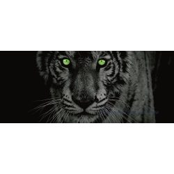 Tigris poszter, fotótapéta 153GVEP /250x104 cm/