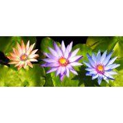 Vízi liliom vlies poszter, fotótapéta 1583VEP /250x104 cm/