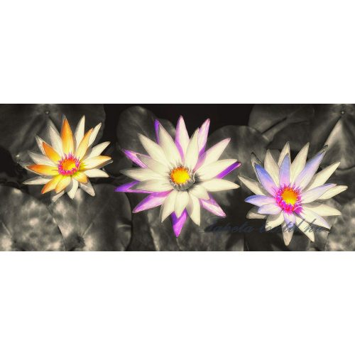 Vízi liliom vlies poszter, fotótapéta 1584VEP /250x104 cm/