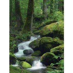 Erdei patak vlies poszter, fotótapéta 163-VE-A /206x275 cm/
