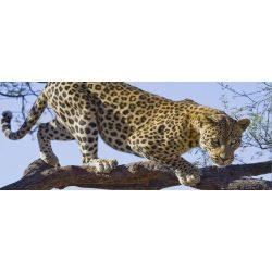 Jaguár poszter, fotótapéta 176VEP /250x104 cm/