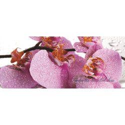 Orchidea poszter, fotótapéta 184VEP /250x104 cm/