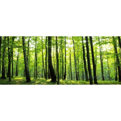 Erdő poszter, fotótapéta 186VEP /250x104 cm/