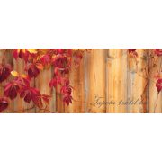 Ivy poszter, fotótapéta 189VEP /250x104 cm/
