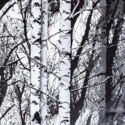 d-c-fix Wood öntapadós tapéta 45 cm x 15 m