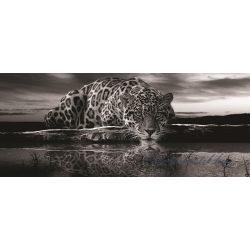 Jaguár poszter, fotótapéta 218VEP /250x104 cm/