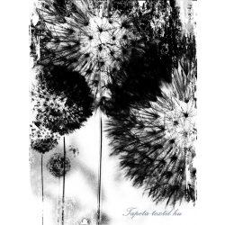 Pitypang vlies poszter, fotótapéta 2189VE-A /206x275 cm/