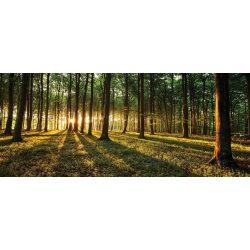 Erdő vlies poszter, fotótapéta 2225VEP /250x104 cm/