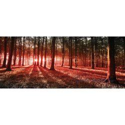 Erdő vlies poszter, fotótapéta 2227VEP /250x104 cm/