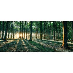 Erdő vlies poszter, fotótapéta 2228VEP /250x104 cm/