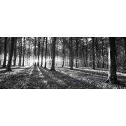 Erdő vlies poszter, fotótapéta 2229VEP /250x104 cm/