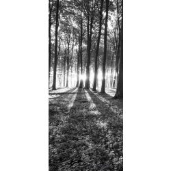 Erdő vlies poszter, fotótapéta 2229VET /91x211 cm/