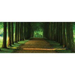 Út az erdőben poszter, fotótapéta 2285VEP /250x104 cm/