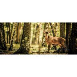 Szarvas az erdőben poszter, fotótapéta 2286VEP /250x104 cm/