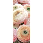Rózsák öntapadós poszter, fotótapéta 2297SKT /91x211 cm/