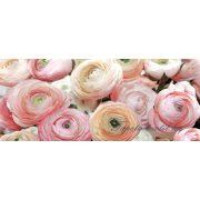 Rózsák poszter, fotótapéta 2297VEP /250x104 cm/