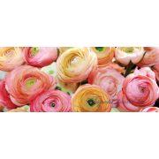 Rózsák poszter, fotótapéta 2298VEP /250x104 cm/