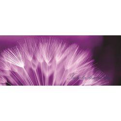 Pitypang poszter, fotótapéta 257VEP /250x104 cm/
