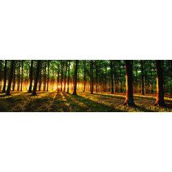 Erdő vlies poszter, fotótapéta 2647VEEXXL /624x219 cm/
