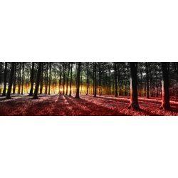 Erdő vlies poszter, fotótapéta 2648VEEXXL /624x219 cm/