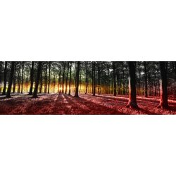 Erdő vlies poszter, fotótapéta 2648VEEXXXL /832x254 cm/