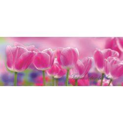 Tulipánok poszter, fotótapéta 273VEP /250x104 cm/