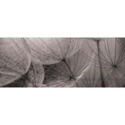 Pitypang poszter, fotótapéta 281VEP /250x104 cm/