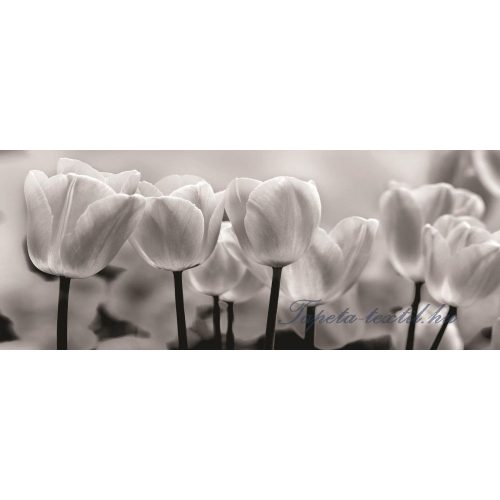 Tulipánok vlies poszter, fotótapéta 287VEP /250x104 cm/