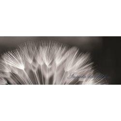 Pitypang poszter, fotótapéta 292VEP /250x104 cm/