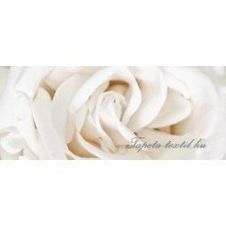 Rózsa poszter, fotótapéta 410VEP /250x104 cm/