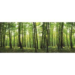 Erdő vlies poszter, fotótapéta 444VEEXXL /624x219 cm/