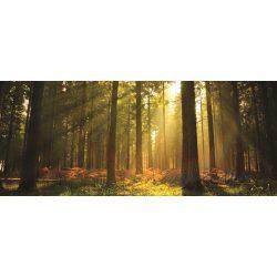 Erdő vlies poszter, fotótapéta 576VEP /250x104 cm/