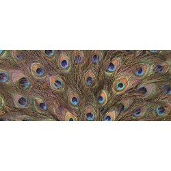 Páva tollak vlies poszter, fotótapéta 645VEP /250x104 cm/
