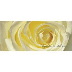 Rózsa vlies poszter, fotótapéta 660VEP /250x104 cm/