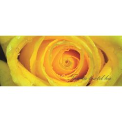 Rózsa vlies poszter, fotótapéta 661VEP /250x104 cm/