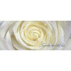 Fehér-sárga rózsa vlies poszter, fotótapéta 663VEP /250x104 cm/