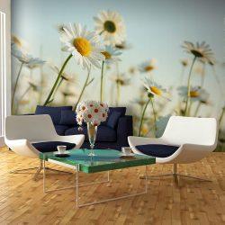 Fotótapéta - Daisies - tavaszi rét