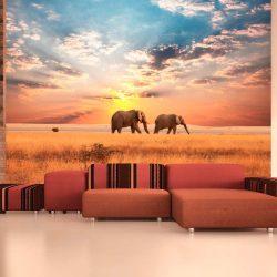 Fotótapéta - Afrikai szavanna elefánt