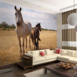 Fotótapéta - Horse and foal