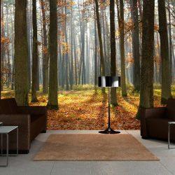 Fotótapéta - Autumn trees