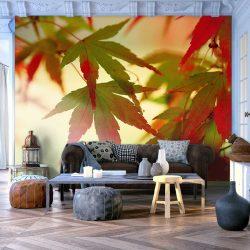 Fotótapéta - Színes levelek