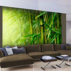 Fotótapéta - jungle - bamboo