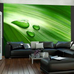 Fotótapéta - Leaf és három csepp vizet